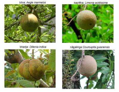 elephant_fruits_small
